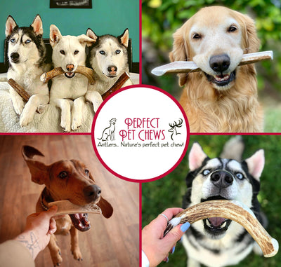 Split Elk Antler Dog Chew- All Natural, Grade A, Premium Antler Dog Treats, Organic Dog Chews, Naturally Shed Antlers from USA