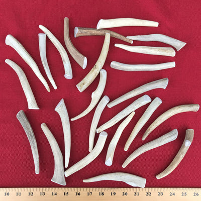 Bulk Small Deer Antler Dog Chew - Long