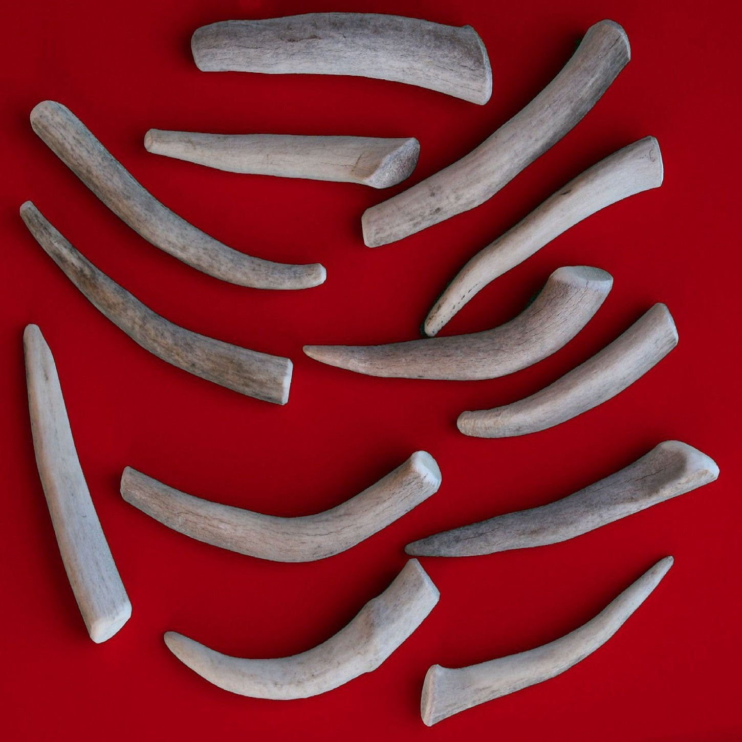 Bulk Small Economy Antler Dog Chew