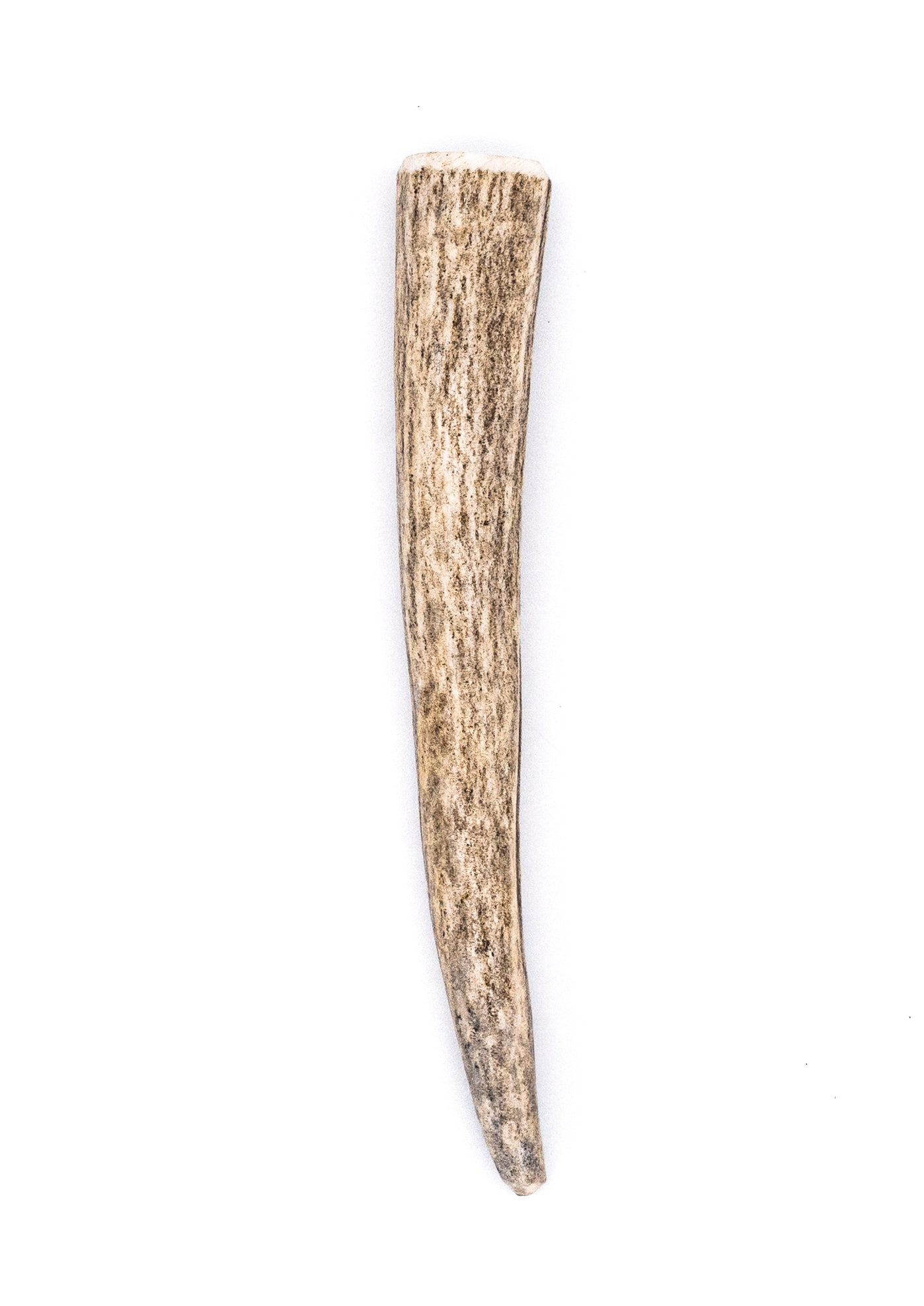 Miniature Deer Antler Dog Chew