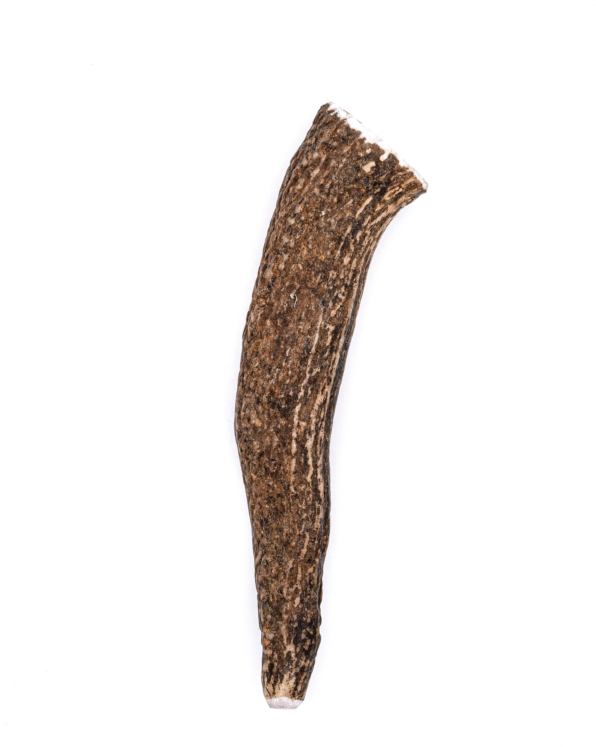 Large Elk Antler Dog Chew