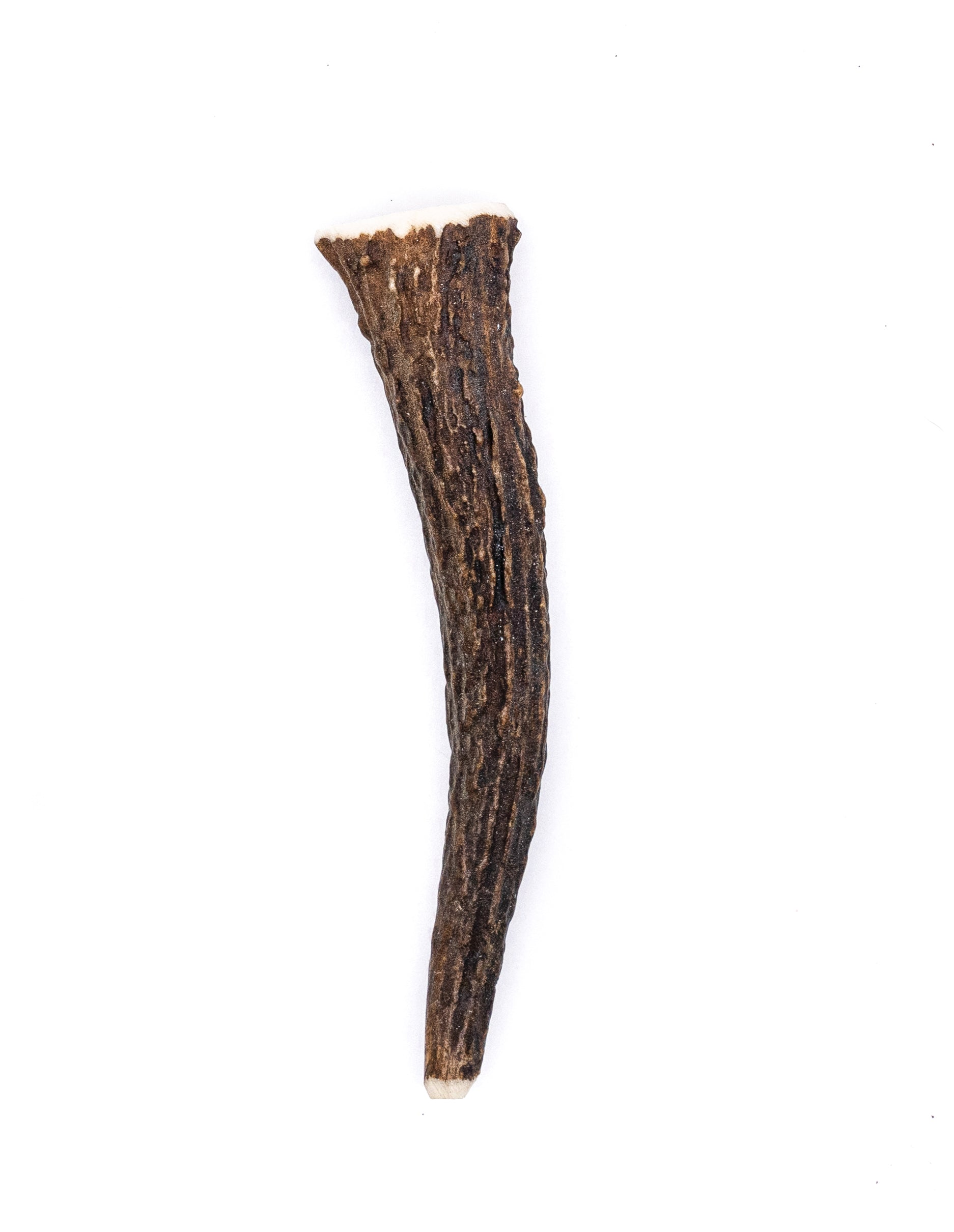 Miniature Elk Antler Dog Chew