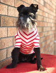 Stripy Dog T-shirt in Red and Cream, 100% Organic Cotton Dog Accessories.