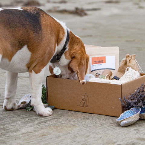 Signature Hound Hamper
