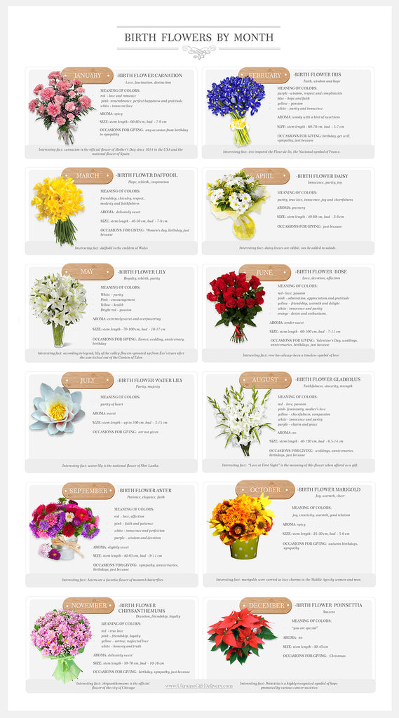 Birth Month Flowers Combined: Elena Volkova Birth Flowers By Month