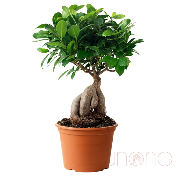 Bonsai By Occasion