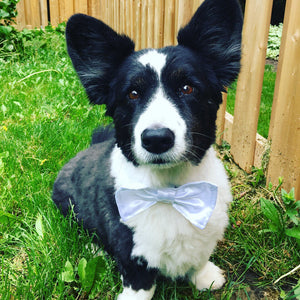 Dog Bow Tie. Wedding. White Satin. Puppy wedding bow tie