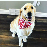Dog bandanas! Small, medium or large Toronto Raptors dog bandanas. It fits on the collar!