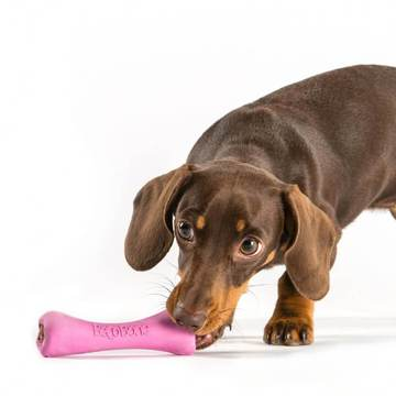 Dog playing with a toy bone