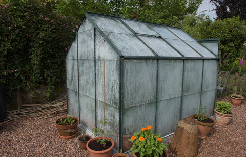 Greenhouse with shading paint on it