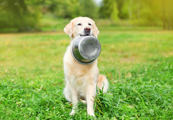 Dog holding food bowl on grass