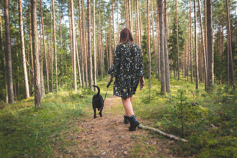 Eco friendly ways to look after your dog - walk local
