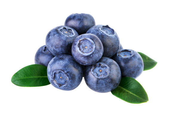 Organic Wild (Native) Blueberries