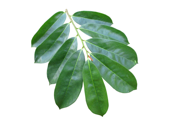 Organic Guyabano Leaves 250gms