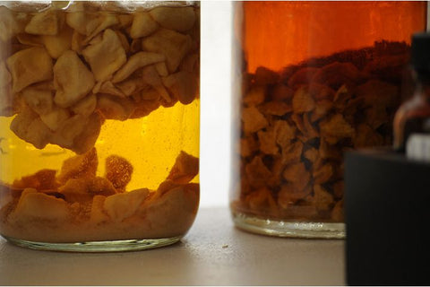 peaches and apricots in tincture