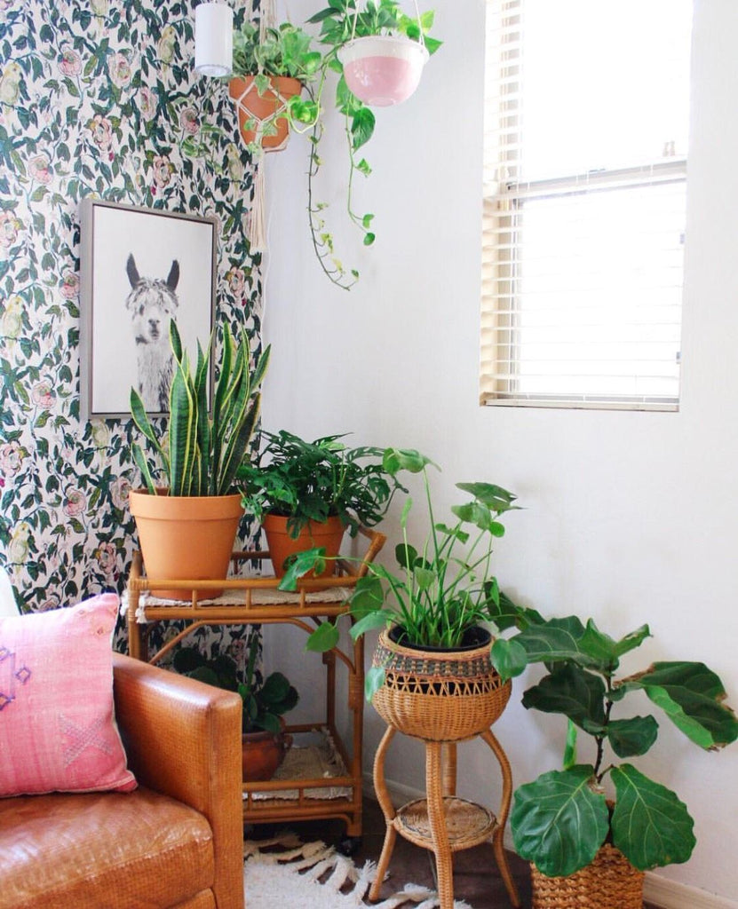 Indoor plants interior design