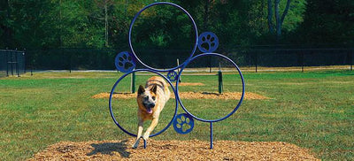 Bark Park Hoop Jump Dog Exercise Equipment