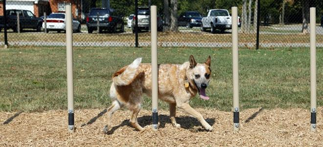 Weave Posts Dog Exercise Equipment