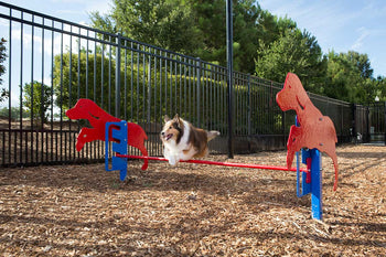 Rover Jump Over Dog Exercise Equipment
