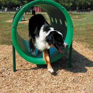 Expert Dog Exercise Course - 9 Activities | WillyGoat Playground & Park Equipment