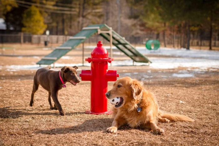 Fire Hydrant Dog Exercise Equipment