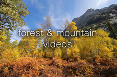 Forest and Mountain Videos - Collection