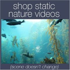 Shop Static Nature Relaxation Videos