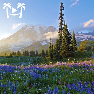"""A Day in Mount Rainier"" Part I 2.5 HR Dynamic Nature Film in 4K"