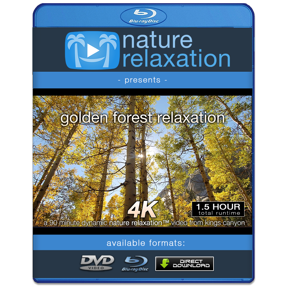 """Golden Forest Relaxation"" 90 MIN Pure Nature Experience 4K"