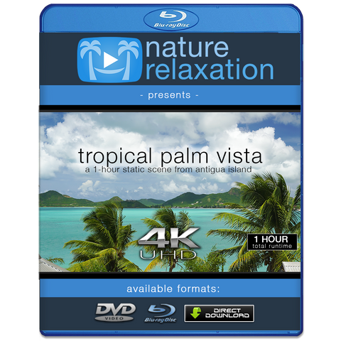"""Tropical Palm Vista"" 1 HR 4K Static Caribbean Video"