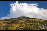 """Golden Aspen Meadow""  10 MIN Healing Music Video HD"