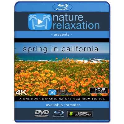 """Spring in California"" 1 HR Dynamic 4K Nature Film (2020)"