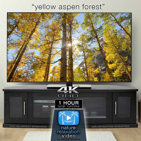 """Yellow Aspen Forest"" 1 HR Static Nature Video 4K"
