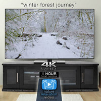 """Winter Forest Journey"" 4K Dynamic 1-Hour Nature Relaxation Film"