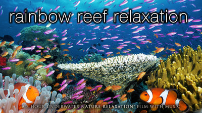 """Rainbow Reef Relaxation"" 1, 3 or 11 HR Dynamic Underwater Film + Music"
