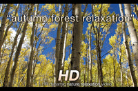 """Autumn Forest Relaxation"" 1 HR Dynamic Nature Video 1080p"