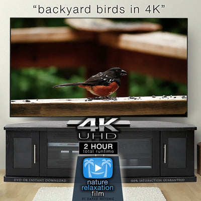 """Backyard Birds"" 2-Hour Dynamic Wildlife Nature Video in 4K"