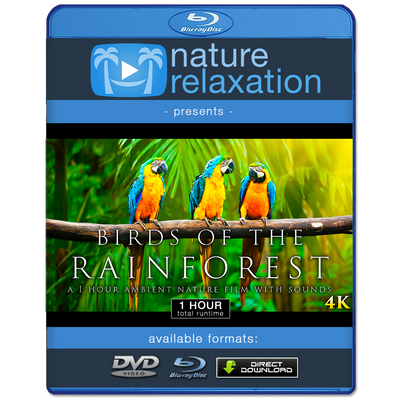 """Birds of the Rainforest"" 1 Hour Dynamic Wildlife Nature Video in 4K"