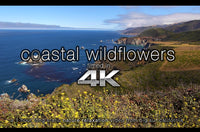 """Coastal Wildflowers"" 1 HR Static (Fixed Angle) 4K Nature Video"
