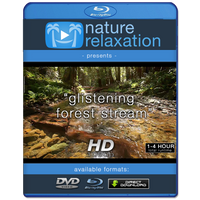 """Glistening Forest Stream"" Static Nature Relaxation Video HD"