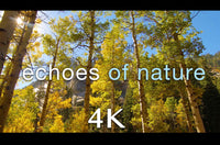 """Golden Echoes of Nature"" Short 2 MIN Music Video 4K"