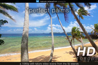 """Perfect Palms"" Tropical Fiji Static Nature Video Scene"