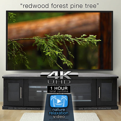 """Redwood Forest Pine Tree"" 1 HR  Static Nature Video 4K"
