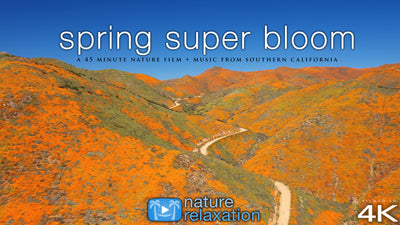 """Spring Super Bloom Relaxation"" 45 MIN Dynamic Film in 4K UHD"