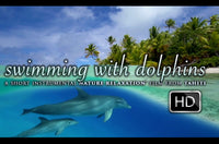 """Swimming With Dolphins"" 10 MIN Dynamic Music Therapy Video HD"