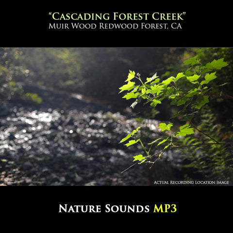 Unlimited Length Stereo Quality Nature Experience MP3 Downloads