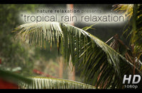 """Tropical Rain Relaxation"" Nature Video 1 Hour 1080p Digital Download or Blu-Ray DVD"