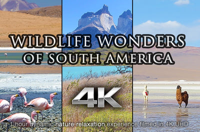 """Wildlife Wonders of South America"" 1 HR Dynamic 4K UHD Music Video"