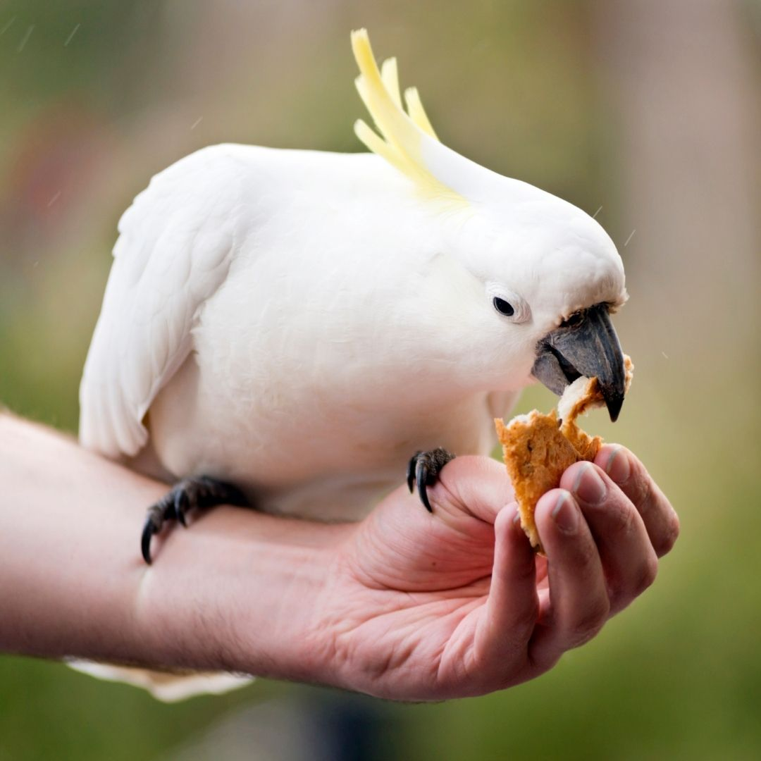 3 Simple Tricks To Teach Your Pet Bird