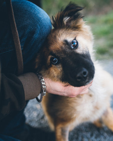 FInding Flea and Ticks on dogs-Poochles
